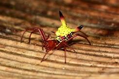 Sungguh Indah! Bagian belakang laba-laba ini terlihat seperti pikachu