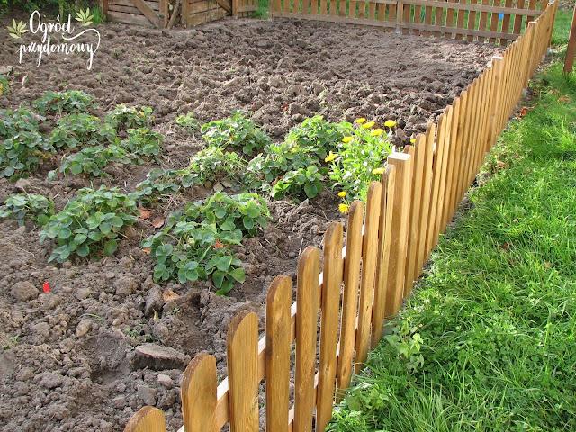 przygotowanie warzywnika do zimy, ogród przydomowy