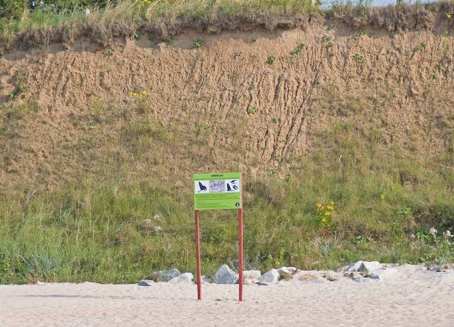jaskółka brzegówka nad morzem, gdzie ma gniazdo