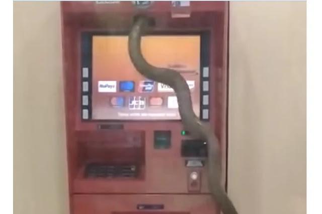 ular masuk atm