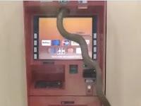 Heboh, Video Ular Besar Masuk ATM