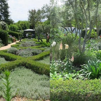 Klein Constantia garden for tea