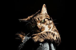 Gato rascando un mueble