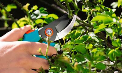 efetue as podas quando as plantas estão com o metabolismo mais lento