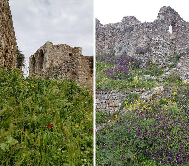 Restauriert und in voller Blüte (Festung Methoni)