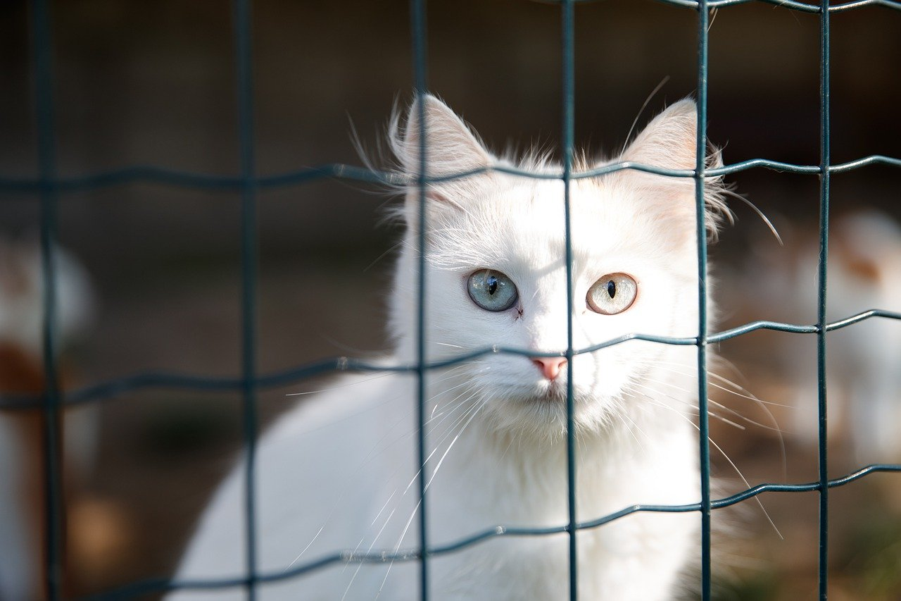 Great Ways To Help Animal Shelters, white cat