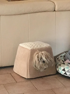 Trixie squished in her dog house