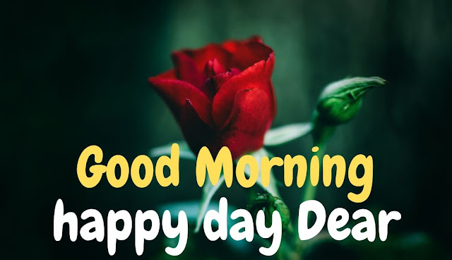Good Morning happy day Dear Red Rose Image