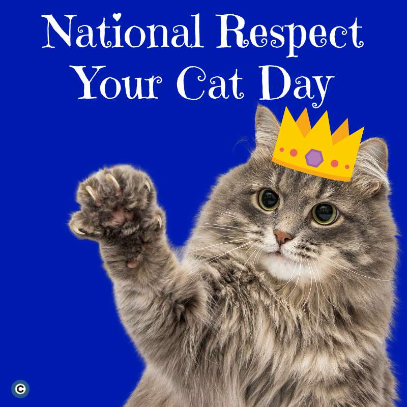 Respect Your Cat Day Wishes Sweet Images
