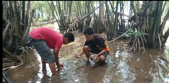 Pemuda Desa Sungai Kupah Inovasi Penanaman Pohon Magrove Melalui Teknologi Digital Kalbar News