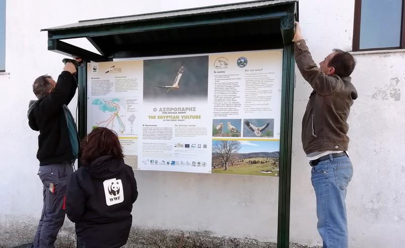 Ενημερωτικές πινακίδες για τον απειλούμενο Ασπροπάρη σε 5 οικισμούς της Θράκης