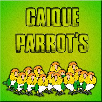 Games2Jolly Caique Parrots Escape