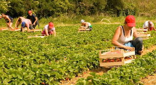 Immigration To Canada:  Canada announces 3 Year Permanent Residence Program for Agri-Food Workers