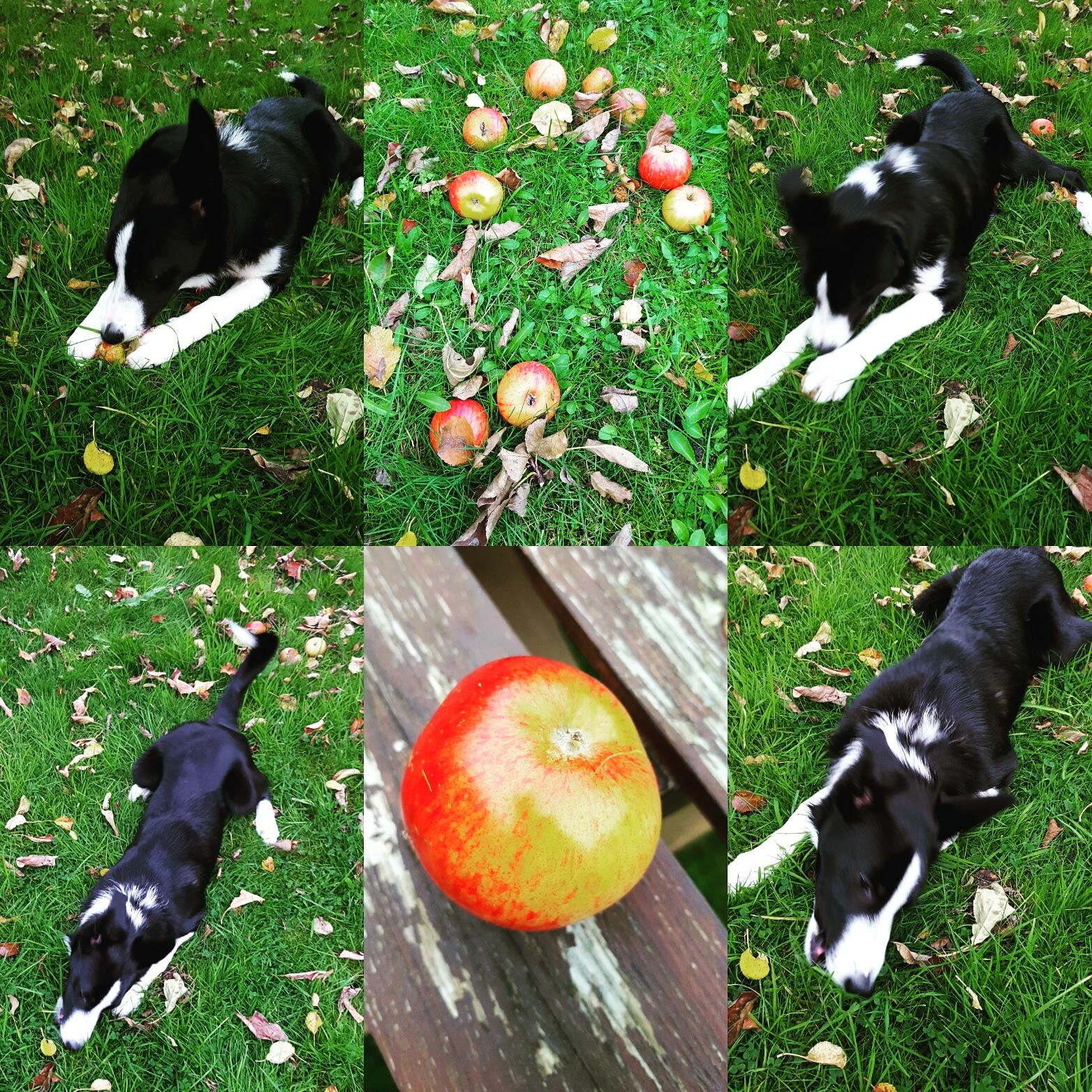 Mollie And The Apples