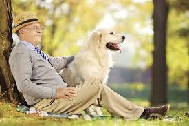4 Reasons to Be Thankful for Your Dog