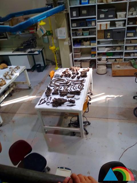 Laboratorio del museo paleontológico de Dinópolis