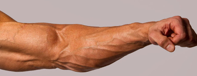 forearms muscles workout