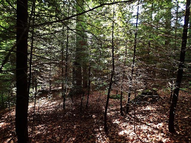 Wracamy nieco mniej gęstą częścią lasu