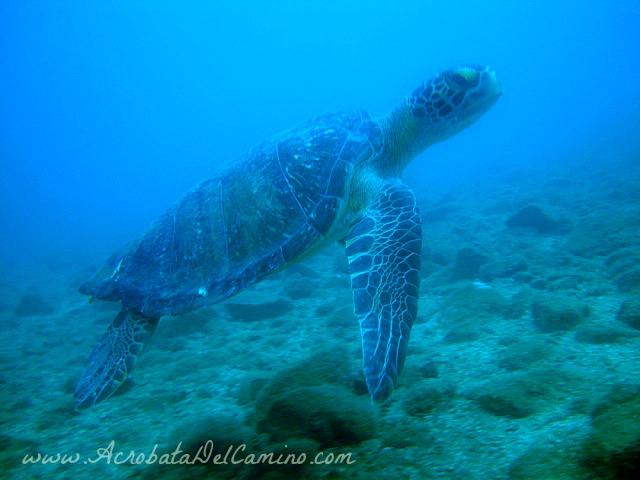 tortugas marinas de colombia