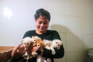 Lepas adopsi kitten pertama kali