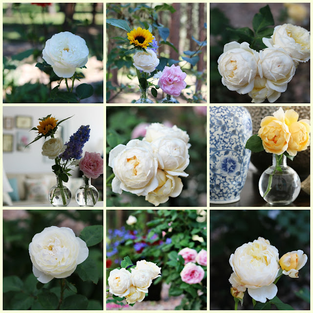 garden, ideas, tips, roses, athomewithjemma