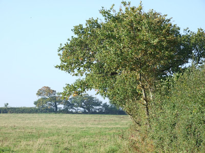 Hedgerow at the edge of a field in Landican