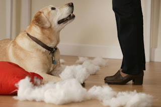 Malos Comportamientos De Mi Perro