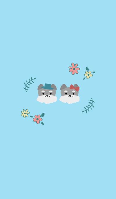 Cute couple schnauzer
