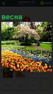 В парке весной распустились цветы на клумбе и кусты, деревья покрылись зеленой листвой