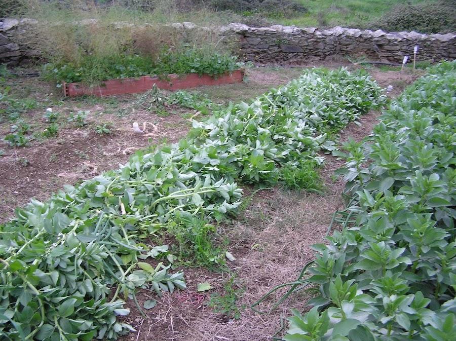Fertilizar huerto el huerto es facil