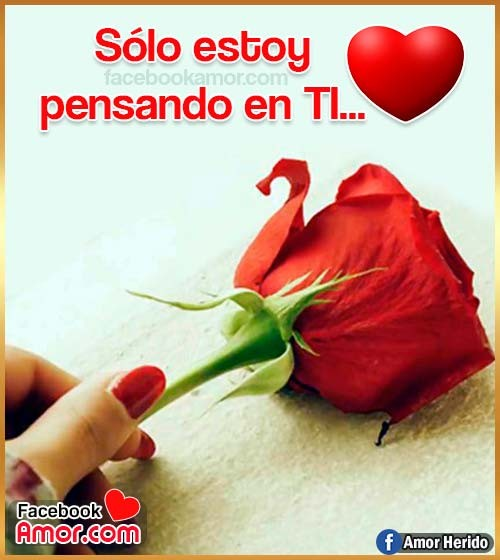 imágenes bonitas de rosa roja