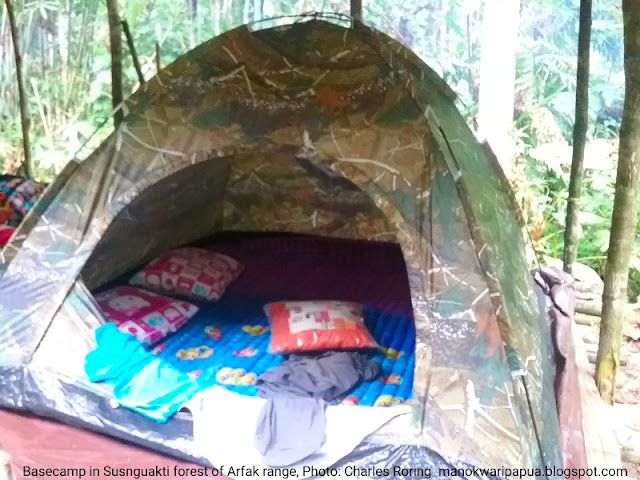 Dome tents with mattrasses, pillows that we provide for tourists in Susnguakti forest of Manokwari