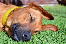 including the opportunity to conserve water and save money on monthly dogs artificial grass the time-saving benefits of never having to weed