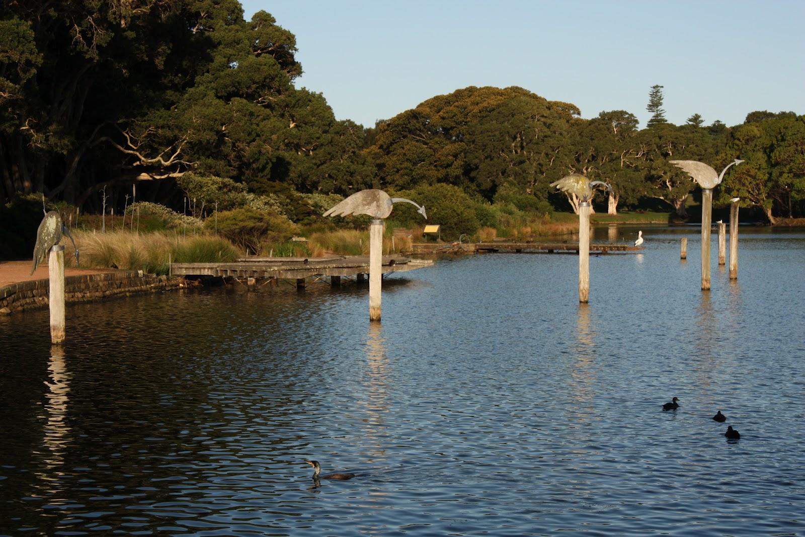 Sydney - City and Suburbs: Centennial Park, Duck Pond