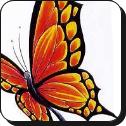 Idei Tatuaj fluturi si insecte