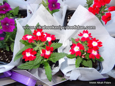 çiçek nikah fidanı İzmir Elif Başar - 8