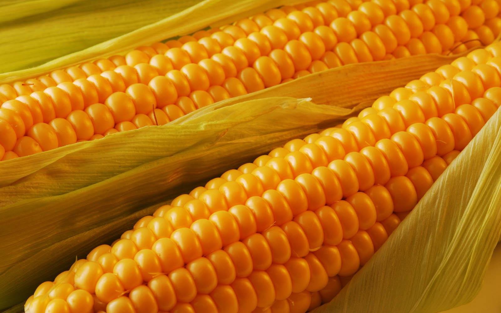 Maize Wallpaper For Presentation: Wallpapers: Fresh Corn