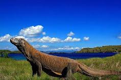 Gawat! Taman Nasional Komodo Keluar dari New 7 Wonders of Nature?