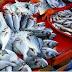 Le Brésil compte bientôt exporter du poisson au Maroc