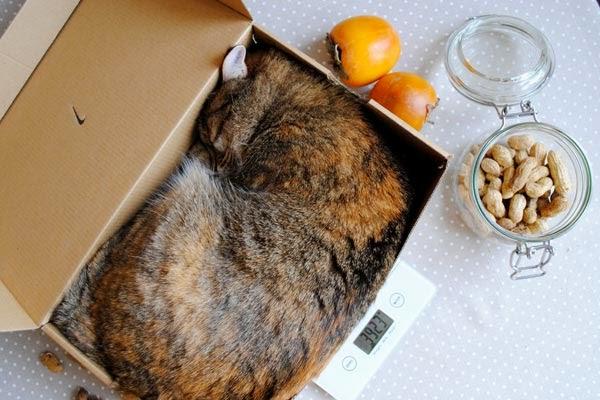 как взвесить кошку