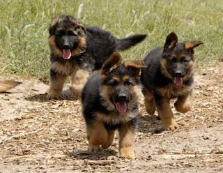 صور كلاب وانواع مختلفة، افضل خلفيات كلاب