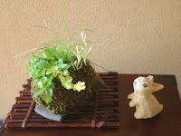 ヘビイチゴとハハコグサの花が咲いている春の草物盆栽