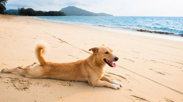 Τα 5 πράγματα που πρέπει να προσέχουν οι ιδιοκτήτες σκύλων το Καλοκαίρι