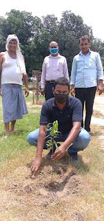वृक्ष हमारे भविष्य को सुरक्षित करते है:डॉ.मधुलिका अस्थाना   #NayaSaberaNetwork