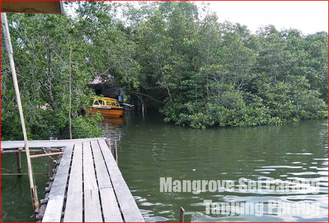 Foto Mangrove Sei Carang Tanjung Pinang