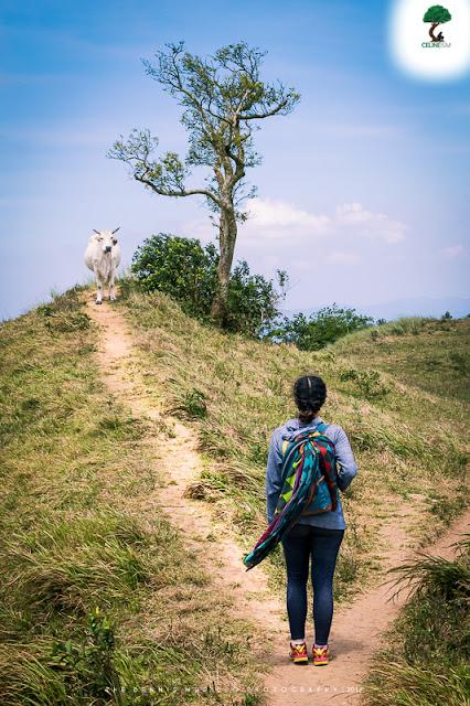 mt. gulugod baboy trail