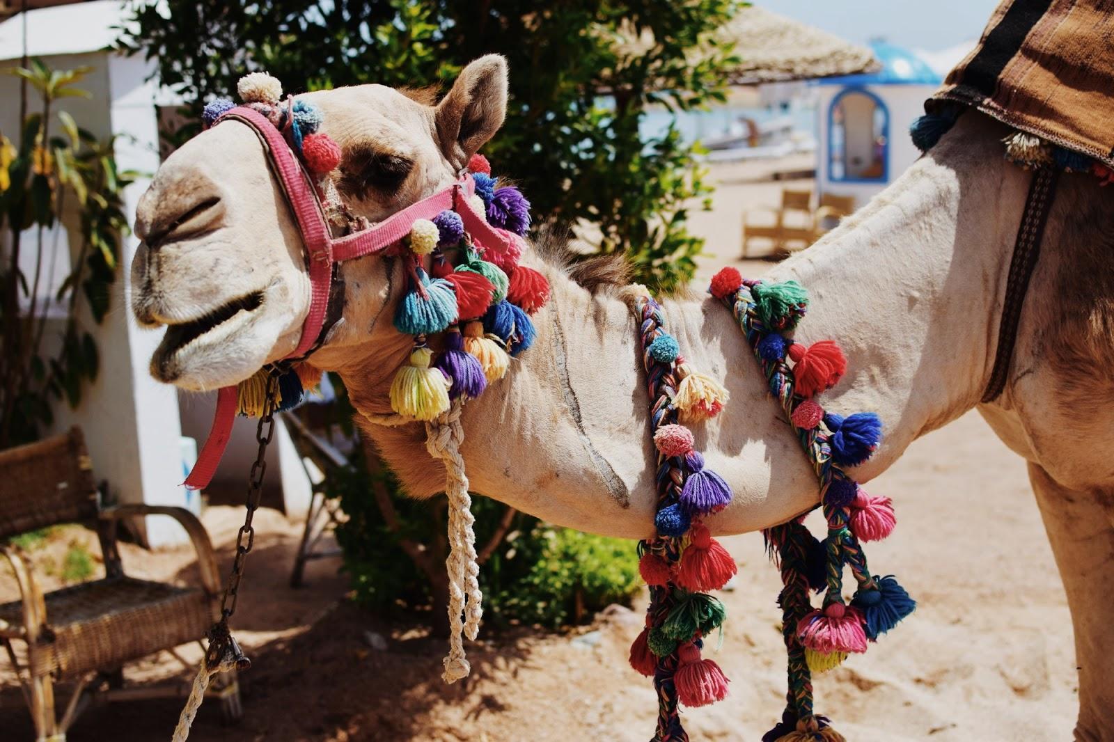 Majówka w Egipcie