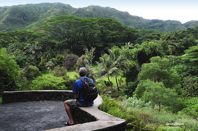 Oahu arboretum vista