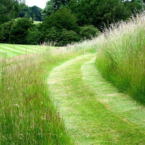 Freshly cut grass. Image taken by tina-manthorpe at Easton Gardens from an article from Pyth + Vigor