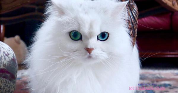 Lelaki Pecinta Kucing Adalah Calon Suami Terbaik, Berikut Faktanya!